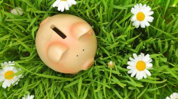 Piggy Bank in the grass with flowers around it