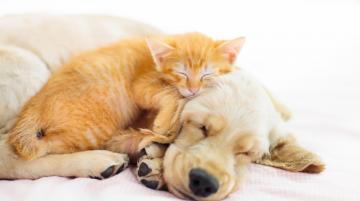 Kitten and Dog sleeping together